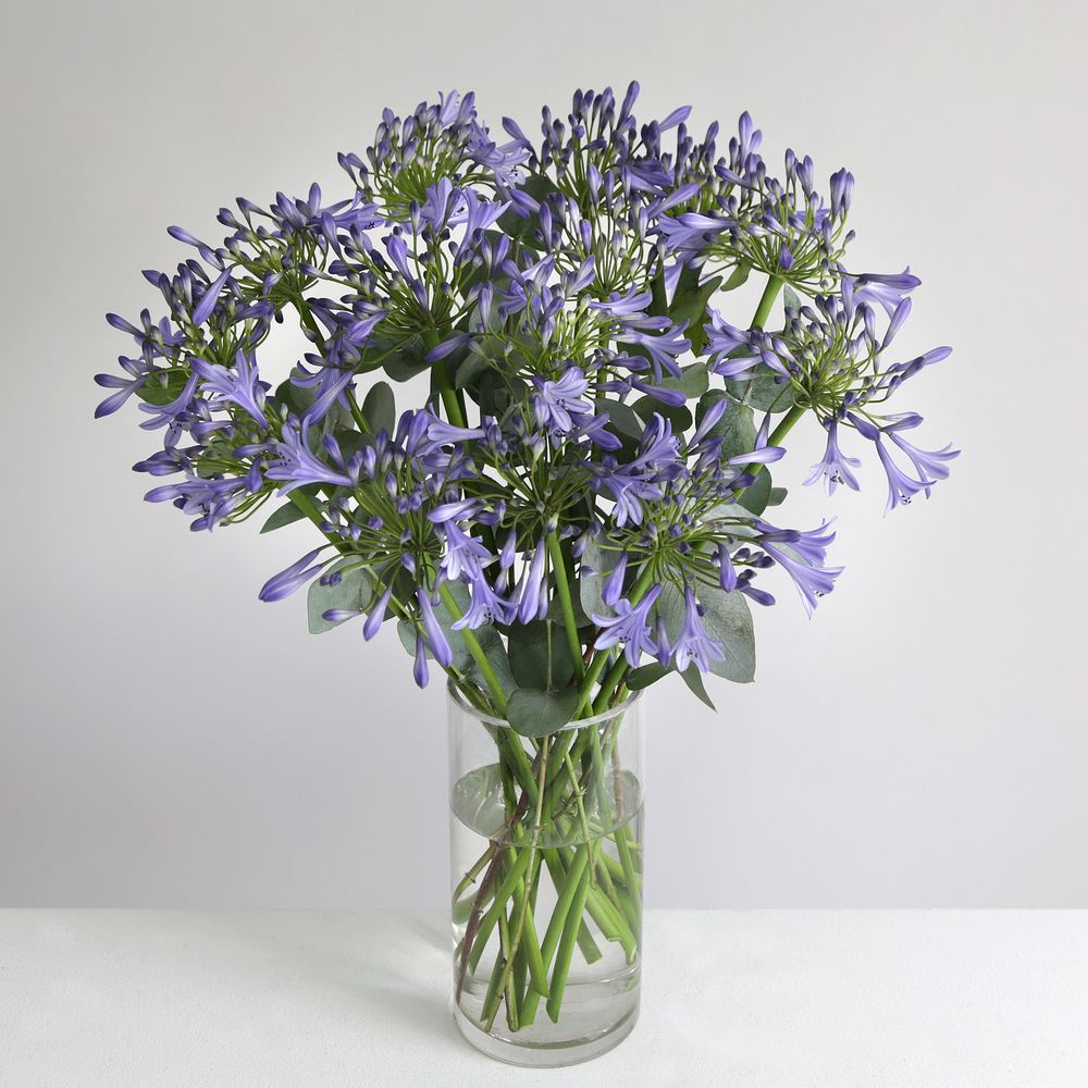 Image of Organic Agapanthus Bouquet - flowers